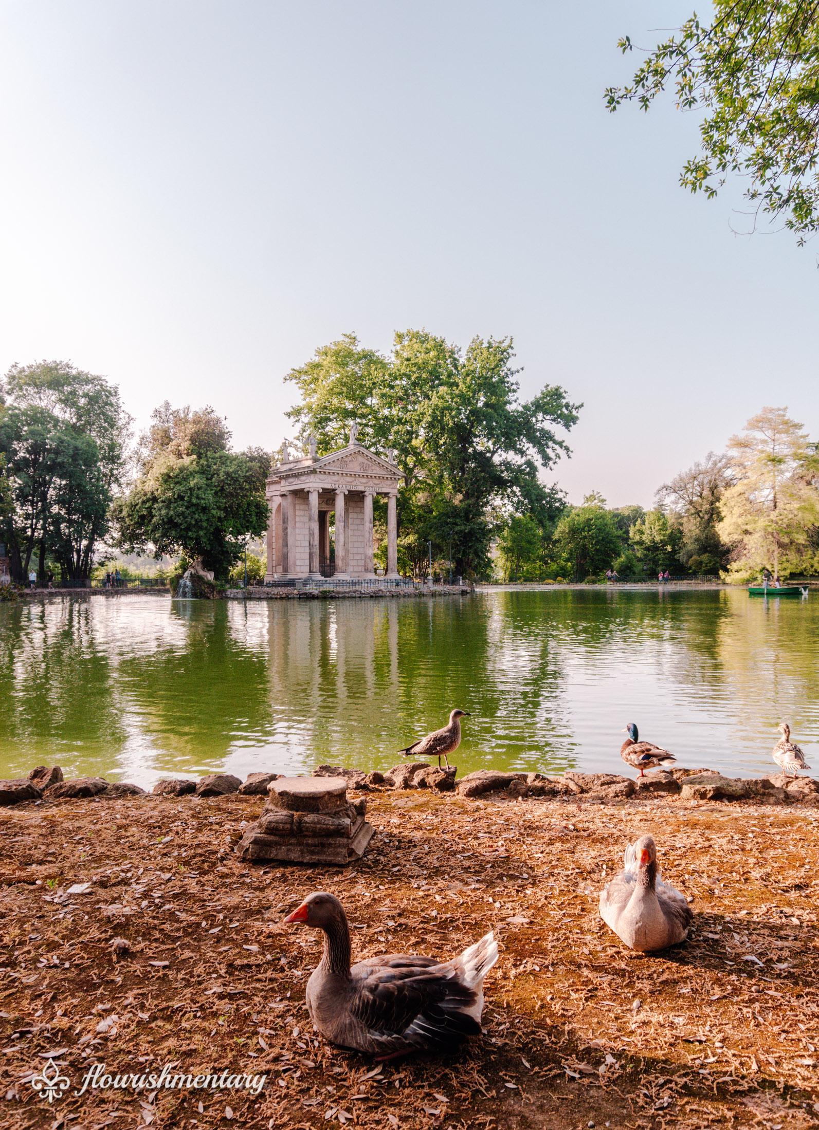 ducks Temple of Aesculapius in Villa Borghese Gardens