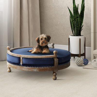 Cute Dog Bed Furniture That Your Pet Will Actually Want To Sleep On